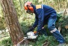 Acton Park TAS Tree felling services 21