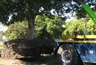 Acton Park TAS Tree felling services 4